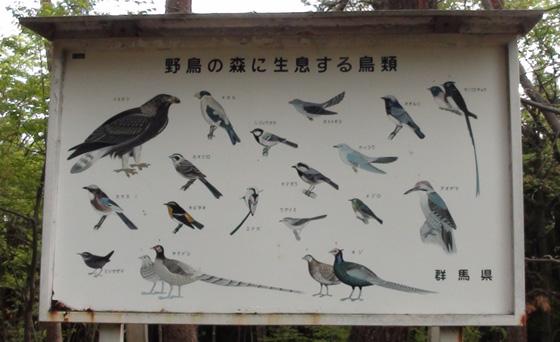 野鳥自然公園で見られる鳥