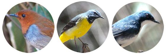 3色の野鳥