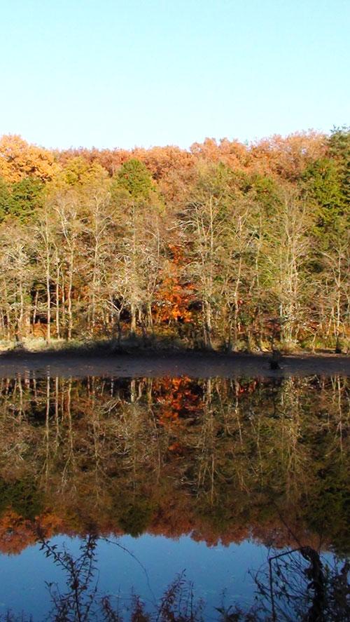 紅葉の水鏡