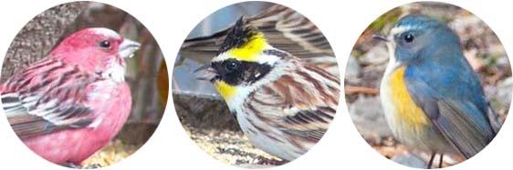 シグナルカラー3色の鳥