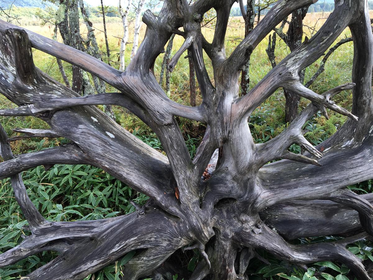 自然の造形美