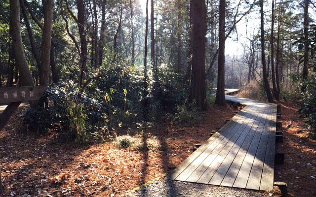井頭公園の木道