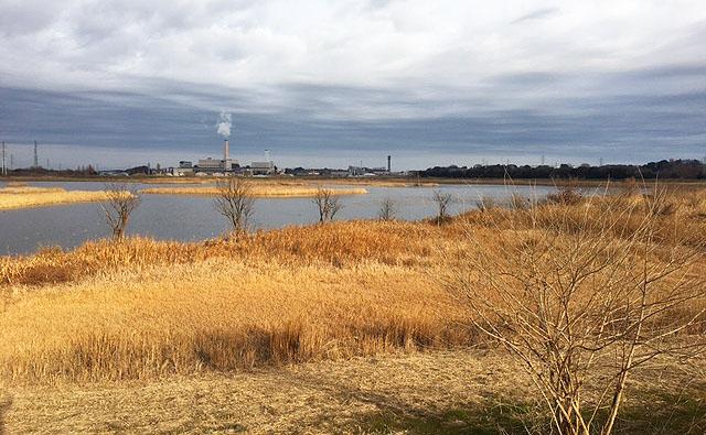 芝川調整池