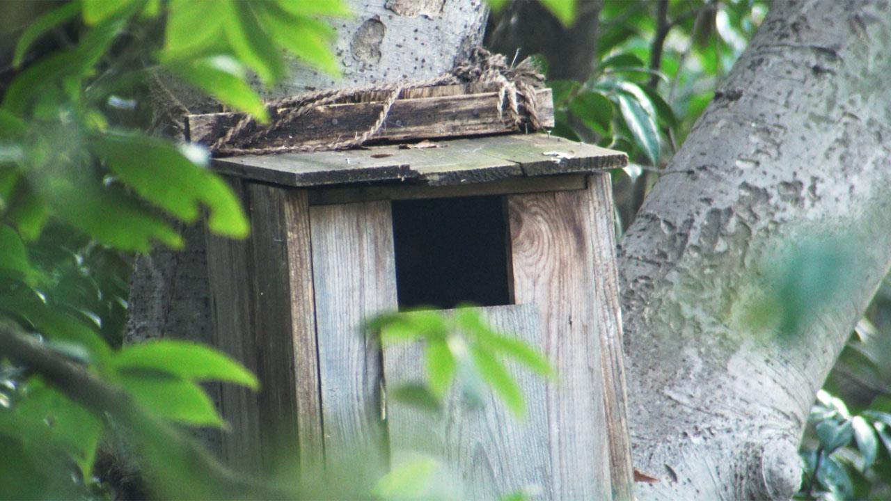 赤塚公園の巣箱