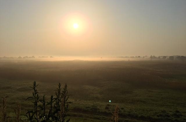 朝霧の渡良瀬遊水地