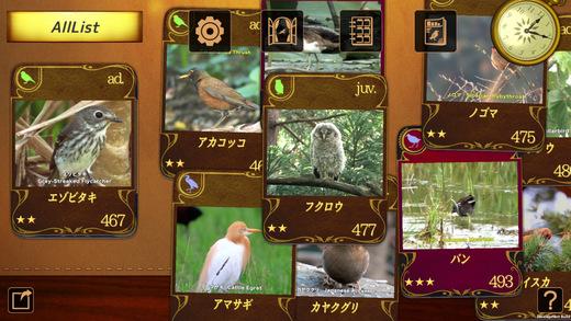 動く 野鳥コレクション