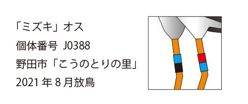 """""""コウノトリ・ミズキの足環"""""""