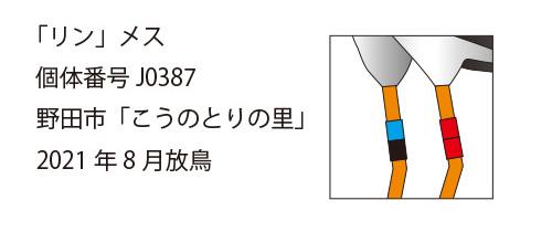 """""""コウノトリ・リンの足環"""""""