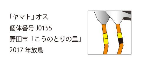 """""""コウノトリ・ヤマトの足環"""""""