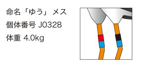 """""""コウノトリ・ゆうちゃんの足環"""""""