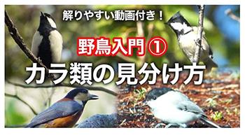 """""""野鳥入門シジュウカラの仲間"""""""